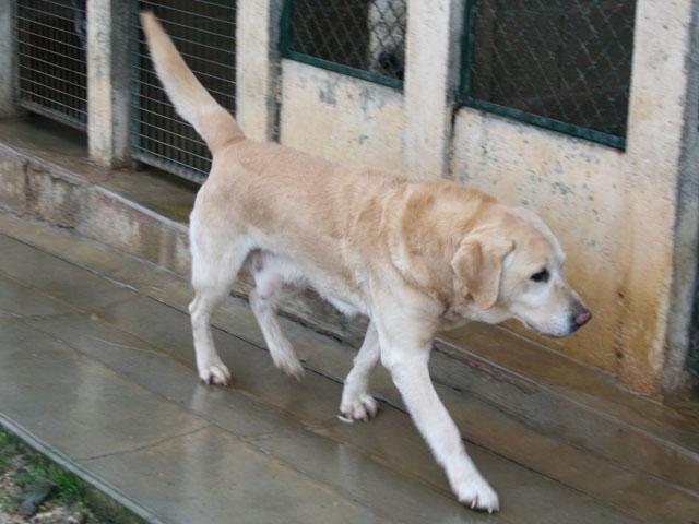 Boomer - Adopté en mars 2009