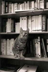 Le chat Calais, adopté en octobre 2011.