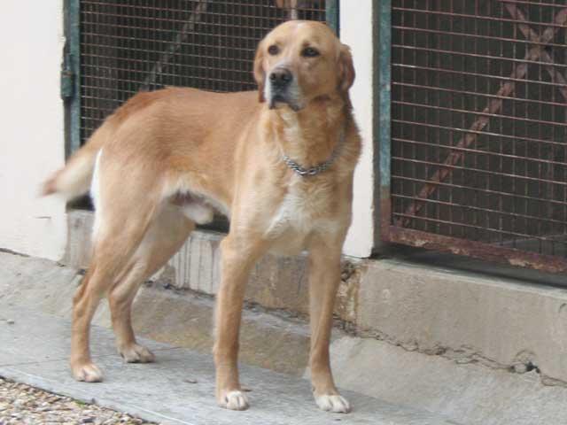 Scott - Adopté en mai 2011