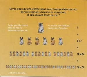Campagne de prévention pour la stérilisation des chats